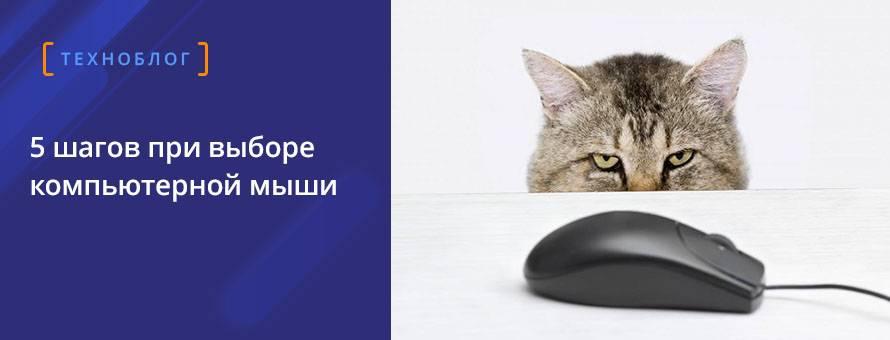 5 шагов при выборе компьютерной мышки